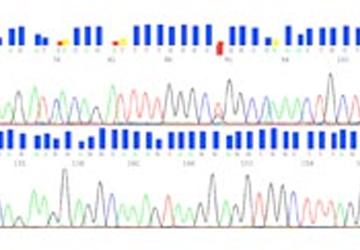 Verteilung genetischer Aberrationen (EGFR, EML4-ALK, KRAS, BRAF, ROS1 und TP53) beim Nicht-kleinzelligen Bronchialkarzinom in norddeutschen Patientenkollektiven